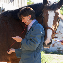 A picture of a female veterinarian listening to the heart of a handsome horse